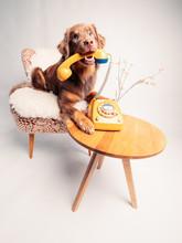 Junger Hund Mit Analogem Telefon