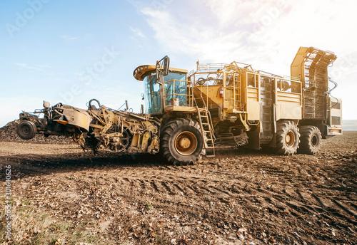 Fotografie, Obraz  Agricultural vehicle harvesting sugar beets