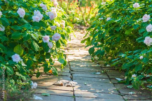 緑と花のガーデニング