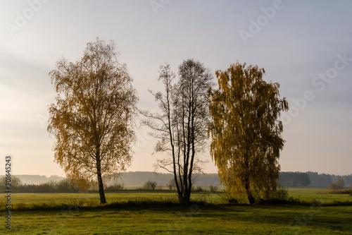 Złota polska jesień na Podlasiu, Dolina Narwi, Podlasie, Polska - 301645243