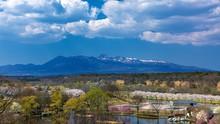 栃木県・那須高原の桜