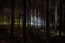 Magical Lights Sparkling In Mysterious Pine Forest At Night.
