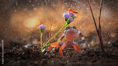 Gecko and insect rainy day, Gecko is a reptile lizard , Indonesia Wallpaper Mural