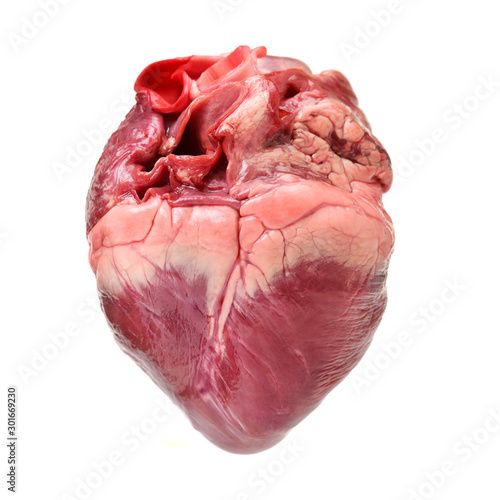 Photo raw pig heart close-up isolated on white background