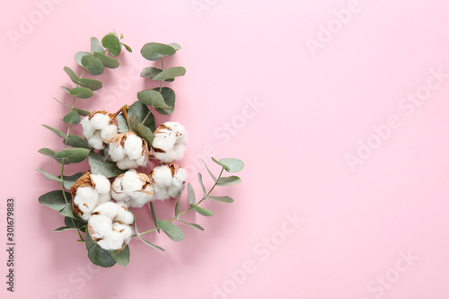 Beautiful cotton flowers and eucalyptus branches on color background #301679883