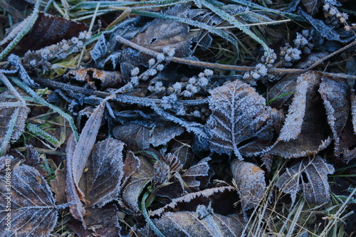 Cuadros en Lienzo  Frosted grass and leaves covered with rime
