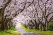 桜のアーチ 春イメージ