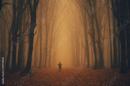 Foto auf Leinwand Dunkelbraun Man lost in a spooky forest. Forest in fog with mist. Fairy spooky looking woods in a misty day with a man lost in it. Cold foggy morning in horror forest
