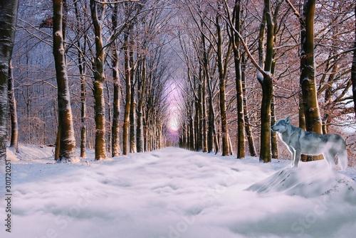 Canvas Prints Road in forest Wald Pfad Winter Wolf Schnee