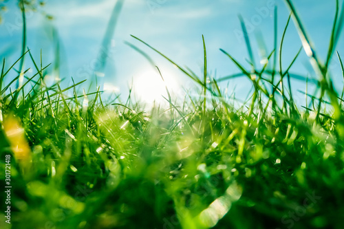 Foto auf AluDibond Wiesen / Sumpfe Fresh grass and sunny blue sky on a green field at sunrise, nature of countryside