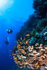 Fototapeta na wymiar Group of divers explore coral reef.