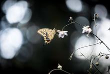 小さな花に止まる蝶