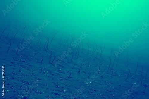 Poster Vert corail coral reef vintage toning / unusual landscape, underwater life, ocean nature