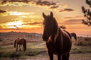 Silhueta de cavalo ao pôr do sol nas montanhas