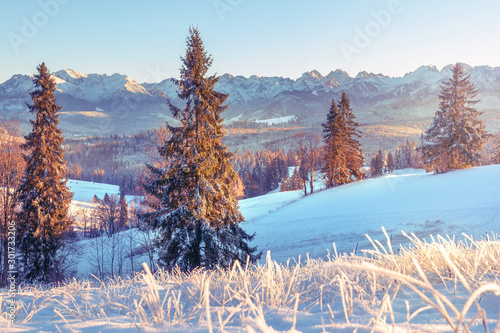 Keuken foto achterwand Lichtblauw Snowy mountain valley in winter season. Christmas trees covered by snow in morning sunlight. Frosty landscape