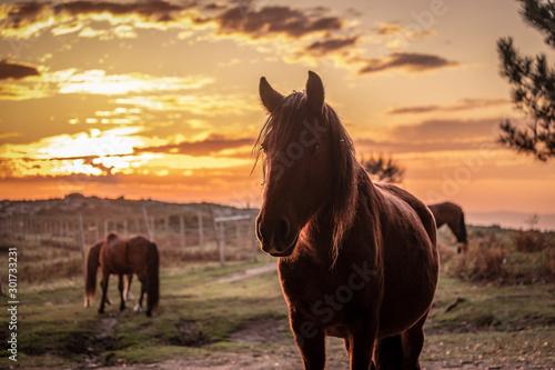 Fotografía  Silhueta de cavalo ao pôr do sol nas montanhas