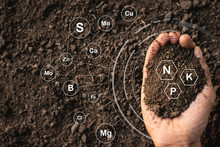 Loamy Soil That Is Rich In Man...