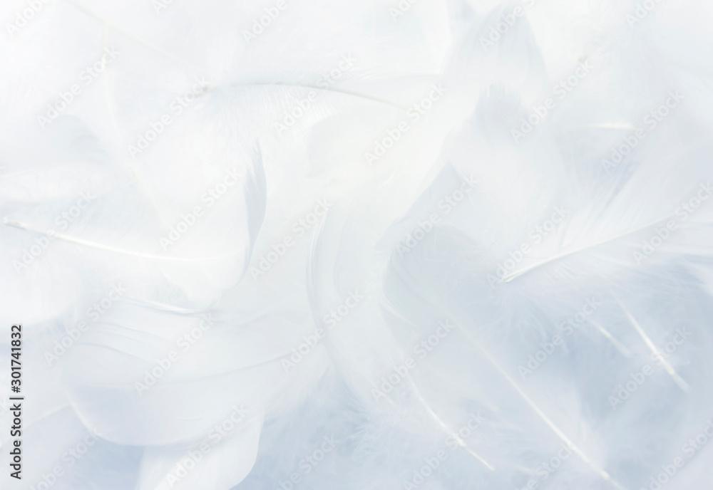 Fototapety, obrazy: Soft white feathers background