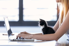 Pretty Little Cat Looking The Laptop While Its Owner Working With Him At Home.
