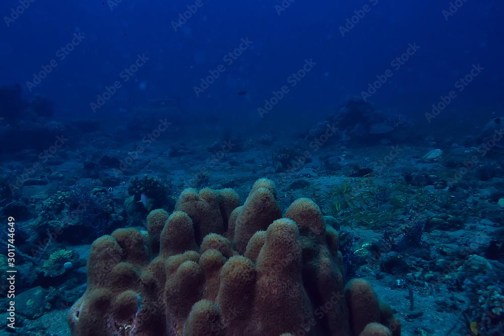 Fototapety, obrazy: underwater sponge marine life / coral reef underwater scene abstract ocean landscape with sponge