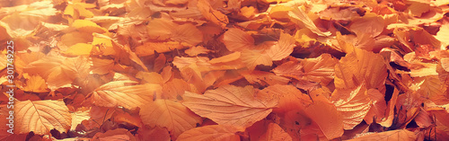 long narrow background autumn leaves  - 301749225