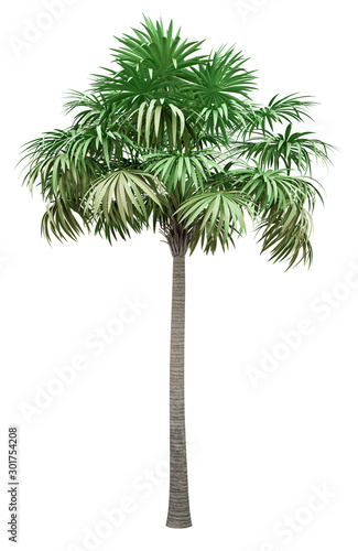thatch palm tree isolated on white background Wall mural