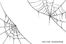 Halloween Spider Web And Spide...