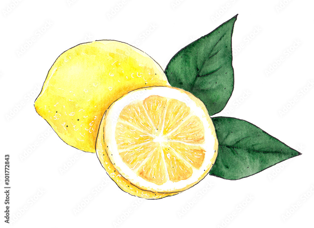Fototapety, obrazy: Watercolor yellow lemon food isolated on a white background illustration. Drawn creative graphic design element.