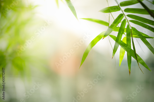 Bamboo leaves, Green leaf on blurred greenery background. Beautiful leaf texture in sunlight. Natural background. close-up of macro with free space for text. #301772807