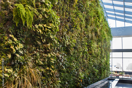 Fotografia Green nature background of vertical garden with tropical planting leafs indoors
