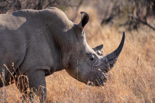 Fényképezés White Rhino of Namibia, Etosha National Park