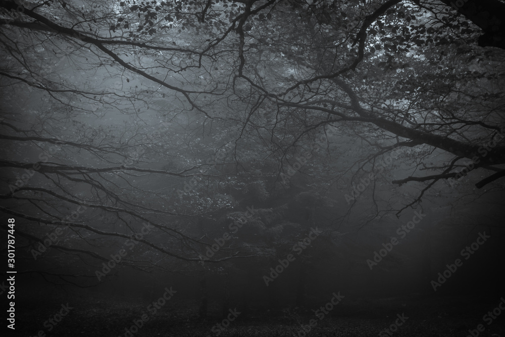 Fototapeta Dark forest of mount Cucco at night with fog in Umbria