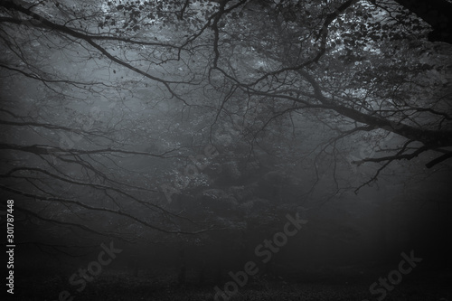 Fototapeta Dark forest of mount Cucco at night with fog in Umbria obraz