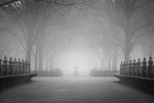 Misty Central Park In New York City