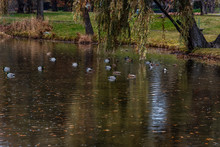 Duck Pond At Cannon Hill Park
