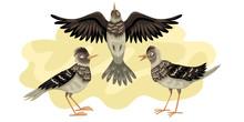 Larks Migratory Bird. Three Birds Fly Against The Background Of The Sky. Larks Migratory Bird. Vector Illustration Of Wild Animals