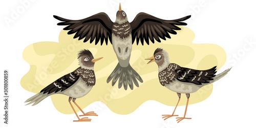 Fototapeta Larks migratory bird
