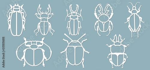 Fotografía  Set beetle paper