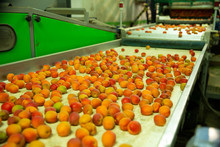 Line Of Calibrating And Packaging Fruits
