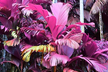 Fototapeta Liście Beautiful infrared shots of tropical leaves and plants in pink and purple color