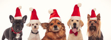 Happy Group Of Dogs Wearing Santa Claus Hats