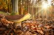 Leinwanddruck Bild - Zwei schöne Steinpilze stehen unter Laubbäumen im leuchtenden Herbstwald, die Sonne scheint