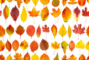 Seamless pattern collection of autumn leaves isolated on white background