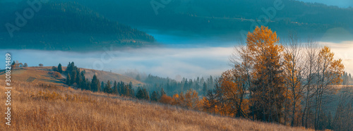 Canvas Prints Autumn Beautiful panorama of autumn, spruce trees covered, mountain hills with fog in valley and wide rural pastures.