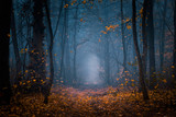 Beautiful, foggy, autumn, mysterious forest with pathway forward. Footpath among high trees with yellow leaves.
