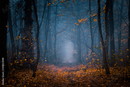 Fototapeta Beautiful, foggy, autumn, mysterious forest with pathway forward. Footpath among high trees with yellow leaves. obraz