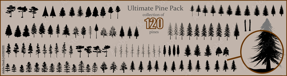 Fototapeta Ultimate Pine collection, 120 detailed, different tree vectors