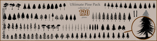Fototapeta Ultimate Pine collection, 120 detailed, different tree vectors obraz