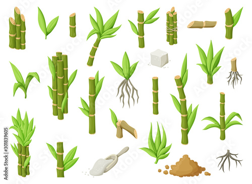 Sugar cane cartoon vector illustration on white background Fototapet