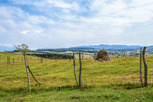 When The Fence Posts Sprout - ...